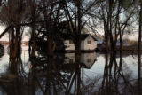 DLM0056  The trees in Marilyn Hilzer's yard can be seen reflecting in the floodwaters that...