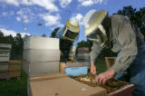 Beekeepers Paul Limbach (cq), right, owner of Western Colorado Honey, and Duncan Williams (cq),...