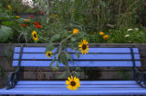 (8/25/04, LAKEWOOD, CO)  Patrick Mangan's garden behind his Lakewood apartment.  A bench sits for...