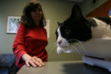 DLM1865  Jonette Gonzales, 32, watches as her cat, Jesse, is examined at a veterinary clinic in...