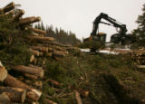 Tad Fry (cq) uses a tree harvester to strip, cut and stack pine beetle-infested trees that were...