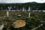 Stumps of trees dot the land after it was clear-cut due to a pine beetle infestation near Fraser,...