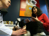DLM1866  Jonette Gonzales, 32, talks with the veterinarian as her cat, Jesse, is examined at a...