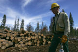 Andy Cadenhead (cq), forester with the United States Forest Service, walks past stacks of logs...