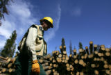 Andy Cadenhead (cq), forester with the United States Forest Service, walks past a stack of felled...