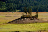 (LAKE GRANBY Colo., June 22, 2004)  A small crop of trees that use to be on a island in Lake...
