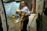 Denver Animal Control officer Frank Jimenez, cq, carries a Lhasa Apso, from his vehicle, Wednesday...