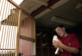 (Arvada, Colo., September 9, 2004)  Twelve-year-old John Swenson began his dove release business...