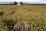 "The Anderson Farm's ""Pirates of the Cornibbean"" corn maze can be seen over the head of a..."