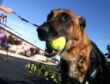 Neeko (cq) gets some exercise outside the Alameda East Veterinary Hospital Tuesday October...