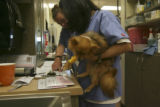 A patient pup. Jennifer Munson, back of frame with hand coming in and Pauline Eadie, black hair...