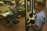 Jennifer Munson, (cq), Certified Veterinary Technician, holds the last of the Nebraska dogs to...