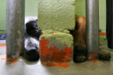 DLM6234  Paint chips away from the wall as two dogs peer out of their cages at the Denver...