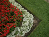 Salvia and alyssum flower bed are in full bloom in Washington Park, in Denver, Colo. on Wednesday,...