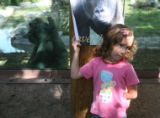 Grace Miner (cq), age 5, hides next to a pole as the gorilla troupe that will be leaving the...