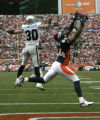 0061 Denver Broncos wide reciever Javon Walker drops a pass in the end zone Oakland Raiders saftey...