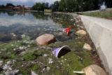 Algae mixed with floating garbage  surrounds part of the shoreline of Ferril Lake in City Park...