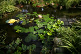 A lilly pond with frog is part of the display at Lafayette Florist and Gift Shop in Lafayette,...