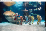 "PRN1 - Newport Aquarium's ""Scuba Santa"" swims with sharks and amazing aquatic creatures..."