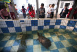 (NYT52) CHANGSHA, China-- Dec. 4, 2007 -- CHINA-LAST-TURTLE-2 -- An 80-year-old female turtle in...