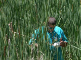 Mike Ciccotti (cq) checks for mosquito larva in a pond on 100th Ave, Thursday afternoon, June 28,...