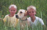 "C2LO_DOG- prieto - 8"" - A Windsor family is searching for their missing labrador retriever,..."