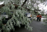 Paul Thompson and his son Shiki, 2, arrive at home to find  a car hit by a tree from their yard at...