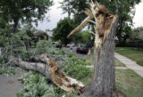 Julie Puma and her daughter check out ta tree that nearly hit her car when she was driving in the...