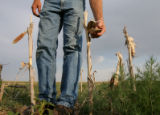 DLM1323  Arnie Good, 57, stands next to the burned up remains of the corn that he planted last...
