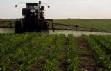 MJM113 Brett Rutlidge (cq) uses a herbicide to kill weeds in one of his corn fields Wednesday...