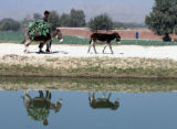 JAB101 - An Afghan man walks along with his donkeys in Jalalabad, Afghanistan, Monday, Nov 12,...