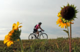 61 year-old Marjorie Bezdek (cq) bikes across the paths of the Cherry Creek reservoir as part of...