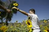 Mary Choate(cq) hands sunflowers to her husband, Aaron  Brachfeld(cq) the land she rents in...
