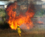A Lower Valley Firefighter  from Fruita Colorado spays water on one of several brush fires that...