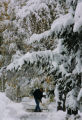 A powerful snowstorm that dropped up to 20 inches of snow in parts of Colorado on October 10th...