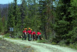 Inmates from  the Colorado Department of Corrections work on  a bark beetle killed tree from the...