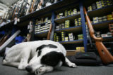 MJM1998  Jake the dog lays behind the counter of The Gun Trader Friday 06/26/08, which is owned...