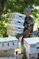 Owner Richard Skaer (cq) bring boxes for the Apricots, at  Z's Orchard, Wednesday morning, July...