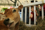 MJM574  Wyatt Wood, 2, of Littleton, Colo. reaches through a fence to try and feed Mac the calf...