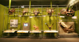 A trophy wall at the new dinosaur exhibit at the Denver Museum of Nature & Science, called...