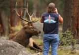 MJM101 Ron Chapman (cq) of Arvada, Colo. takes a photo just a few feet from a bull elk on the...