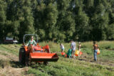 Students from Culinary School of the Rockies, as well as volunteers,  work in a potato field at...