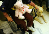 MJM206  Kayla Kopp (cq), 9, of Highlands Ranch pets her service dog, Sandy as they take part in an...