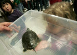 Skyline Vista Elementary pre-K student Marie Dana, 4 checks out a western painted turtle in the...