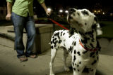 846  Jonathan Biggerstaff takes his dog Austin for a late evening walk in Civic Center Park in...