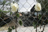 Flowers intertwined amongst a fence on Monday, August, 4, 2008.  Fire investigators from West...