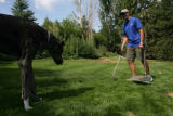 Sam Johnson, (cq) President and Scoop Master of Pet Scoop works while Duke (cq), a great dane,...