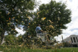 2853  Leaves fly as Jose Palma, operations supervisor for Civic Center Park, mows a section of the...