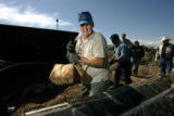 0612 Bill Harris helps to retrieve various types of meat from a barbecue pit at the first annual...