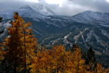 A group of changing Aspen tree stands against the Ten Mile Range and Breckenridge Ski area, Monday...